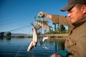 Kyrgyzstan, Issyk Kul region, fishery.