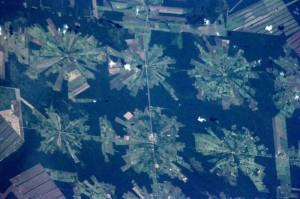 Bolivia-Deforestation